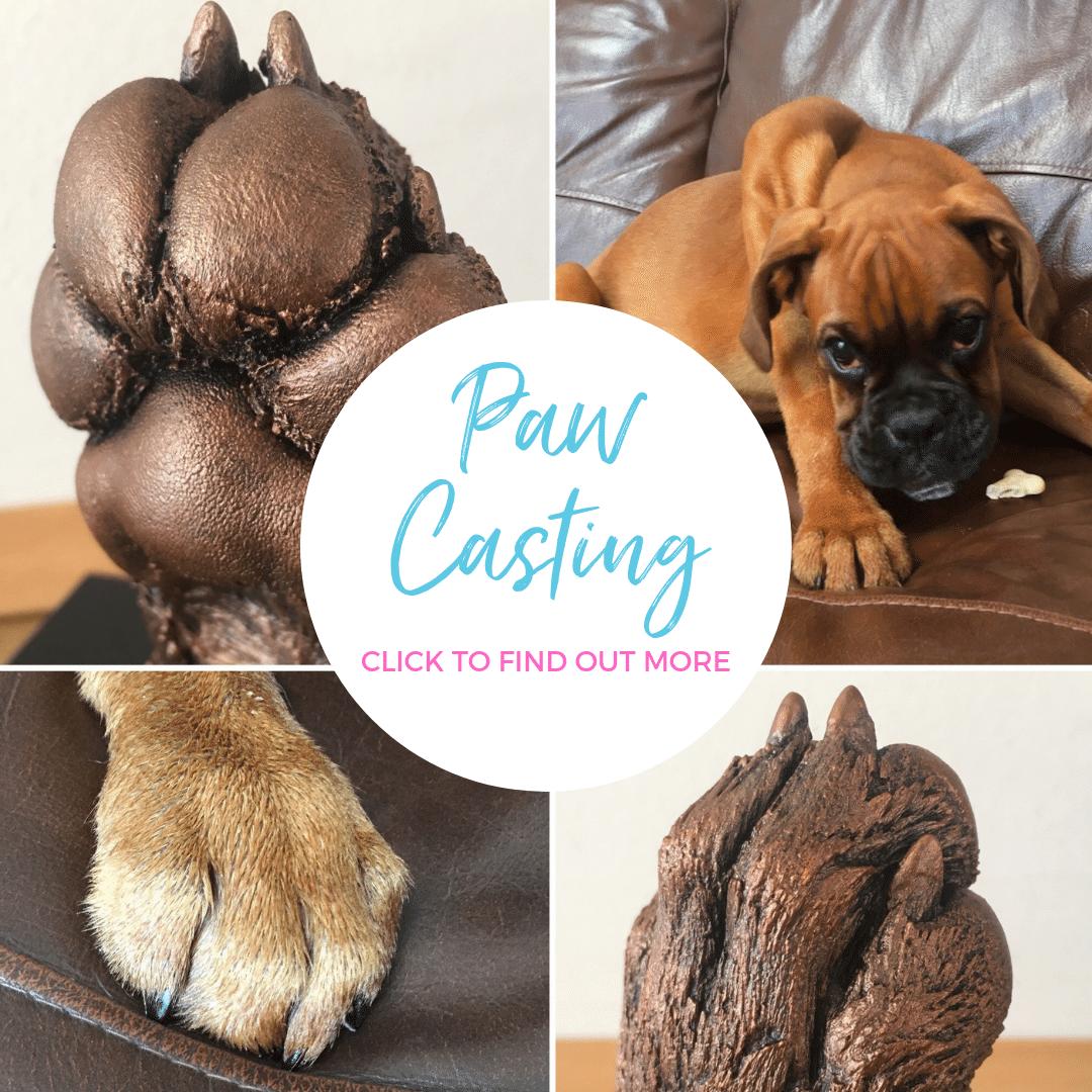 paw casting